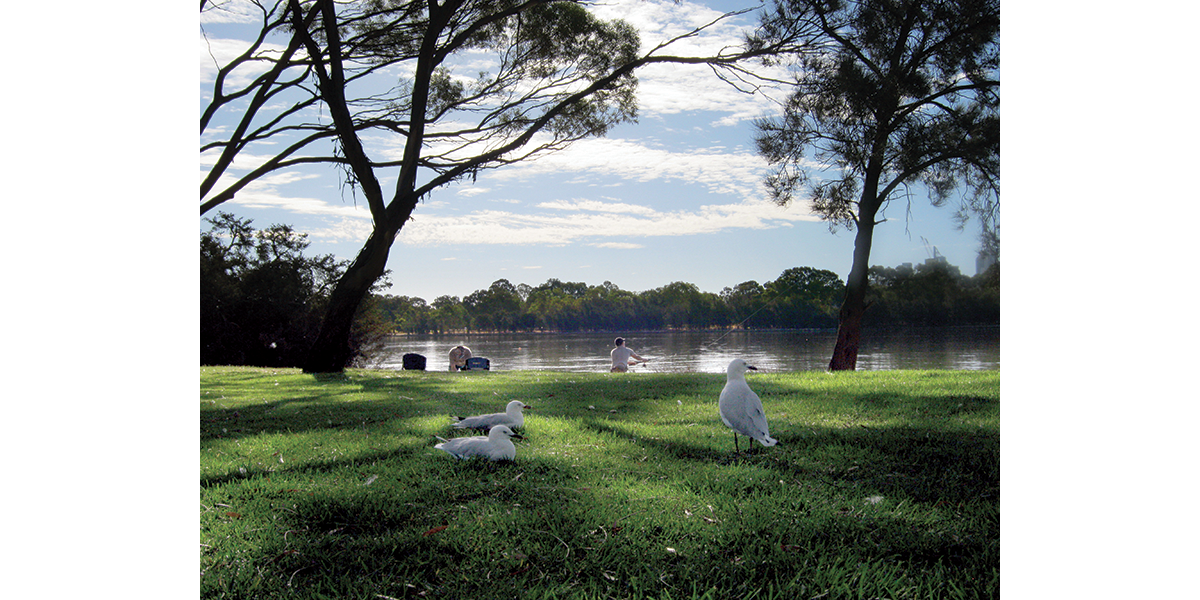 Perth Around – Wetland and birds