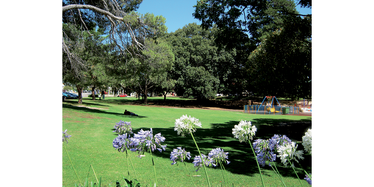 Perth Green – Wetland and grass